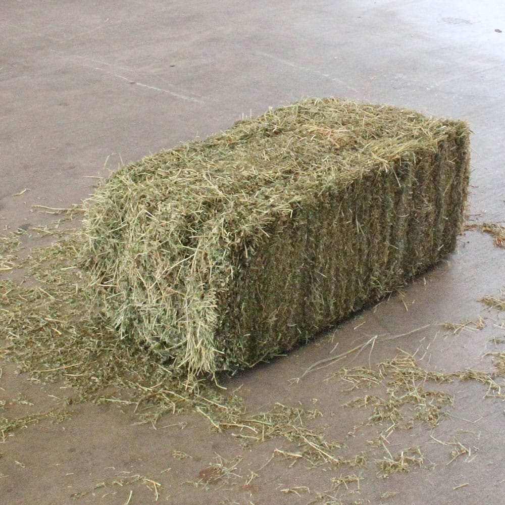 Alfafa hay feed